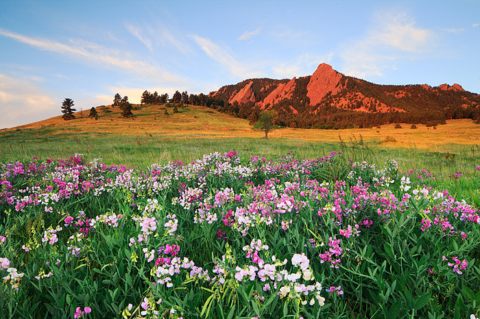 Sweet Pea and the Boulder Flatirons