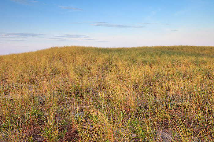 Dunes and grasses along Dune Beach
