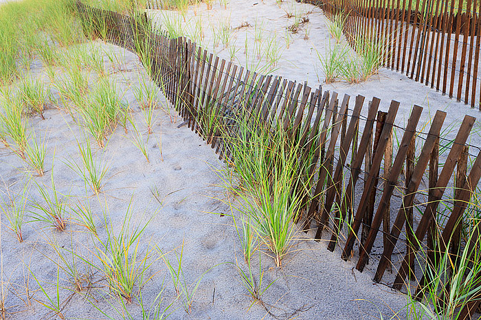 Dune Fence at Halsey Neck Beach