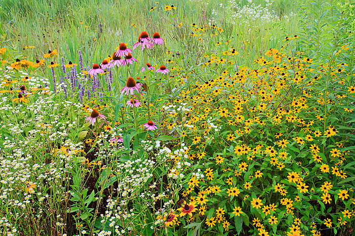 Wildflower Garden in Southampton, New York