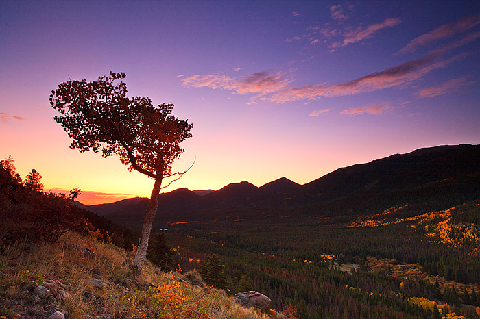 A fall Aspen tree frames sunrise looking east from the Bierdstadt Moraine