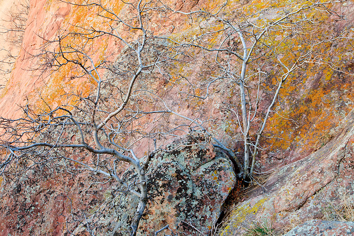 Tree's grow out of Boulder, Colorado's Red Rock Formation