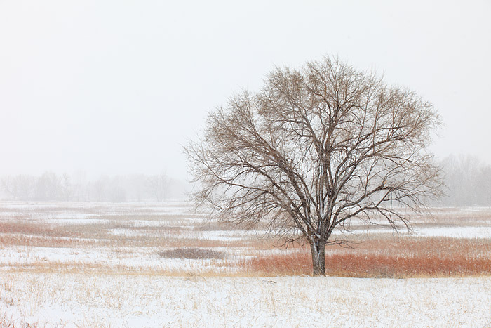 Snow falling on Bobolink Cottonwood