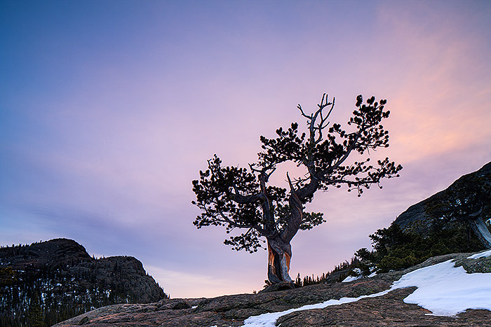 A muted but still colorful sunrise colors the sky over Glacier Gorge and a Krummholz tree. The conditions in Rocky during the month of March are ever changing which can make photography in the park both difficult and dynamic. Technicial Details: Canon EOS 1Ds III, 24mm TS-E F3.5 L II