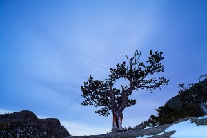 A lone Krummholz tree sits above Glacier Gorge prior to sunrise. Singularity helps to make this pre-dawn image of a tree more meaningful than if it was amongst a group of trees. Technicial Details: Canon Eos 1Ds III, 24mm TS-E F3.5 L II