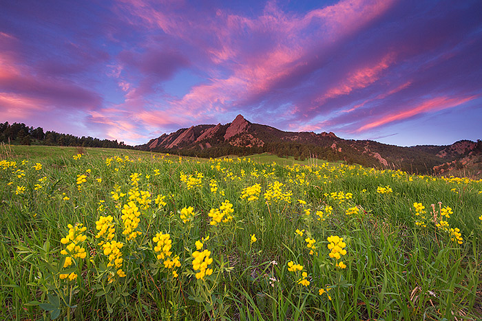 What's better than this after a long winter?. It's be a long wait, but worth it for images like these. The sky errupts with color over Chautauqua Park and The Flatirons of Boulder on a beautiful spring morning. Golden Banner fills the meadow below the iconic rock formation. Technical Details: Canon EOS 5D Mark III, 17mm TS-E F4 L