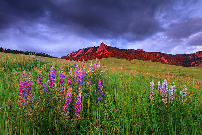 Just enough drop under light illuminates the Flatiron formation at sunrise in Boulder. Silver Lupines blooming in Chautauqua Meadow combined with the dark ominous clouds made for a brief but awesome morning of photography with the help of a little storm lighting. Technical Details: Canon EOS 5D Mark II, 16-35mm F2.8 L II