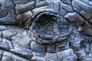 The charred remains of a spruce tree make for and interesting subject for photography near Cub Lake. The metallic like sheen and patterns made for a reptillian like resemblence. Technicial Details: Canon EOS 5D Mark III, 100mm Macro F2.8 L IS