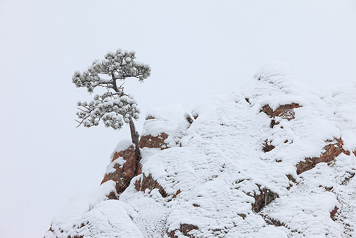 On snowy days in the middle of winter it's likely that you will find me trouncing around Flagstaff Mountain just west of downtown Boulder. It's a favorite location of mine when I need to break the monotony of winter and find inspiration close to home. Wind swept Ponderosa Pines cling to the rock flanks of Flagstaff Mountain which makes for interesting photography, especially in snow. Technical Details: Canon EOS 5D Mark II, 70-200mm F4 IS L