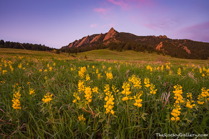 It's finally getting to be that time of year again. Wildflowers are once again appearing in Chautauqua Meadows below the Flatirons of Boulder, Colorado. It's always great to welcome back the golden banner to the meadow as it was when I photogrpahed the Flatirons this past Sunday. Technical Details: Nikon D810, Nikkor 16-35mm F4 AF VR ED lens