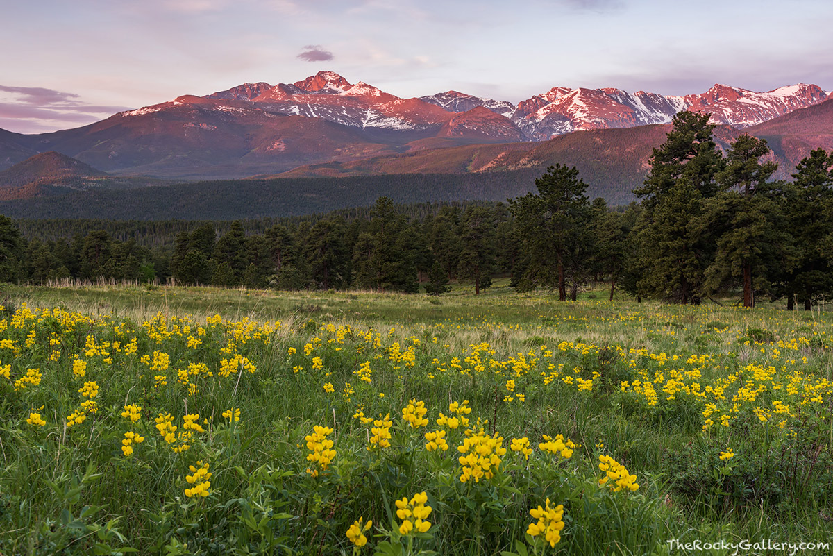 It seems as though summer arrived overnight in Rocky Mountain National Park. A few warm sunny days and the snow is quickly melting and the early season wildflowers are in bloom all over the lower to mid elevations of Rocky Mountain National Park. The Golden Banner looks beautiful around Beaver Meadows and made a great subject for this image of Longs Peak at sunrise last week. Technical Details: Nikon D810, Nikkor 24-70mm F2.8 AF