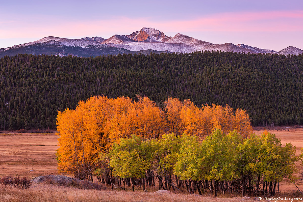 Even though the autumn season in Rocky Mountain National Park is quickly coming to a conclusion. There are still a few areas in the lower elevation of Rocky Mountain National Park where one can capture images of the fall season. These narrowleaf cottonwood trees in Moraine Park looked stunning as first light illuminated a snow covered Longs Peak yesterday morning. The aspen trees just in front of the golden cottonwoods are just starting to change from  green to yellow. Technical Details: Nikon D810, Nikkor 24-70mm F2.8 ED AF lens