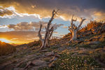 Alpine,Tundra,Trail Ridge Road,Landscape,Photography,Estes Park,Krumholz,RMNP,Colorado,Rocky Mountain National Park,Sunrise,July