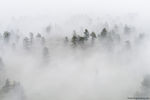 Fog,Moody,Landscape,Photography,Boulder,Colorado,Sunrise,May,Walker Ranch,Open Space,Boulder County,Trees,Ponderosa Pines,Flagstaff Road,OSMP