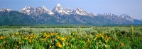Grand Tetons, Wyoming, National Park, Antelope Flats, Wildflowers