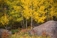 Moraine Park,Bear Lake Road,RMNP,Estes Park,Fall,Autumn,Aspens,Big Thompson,River,Landscape,Photography,Colorado,Rocky Mountain National Park