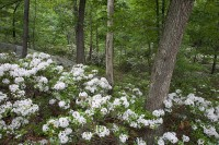 Bear Mountain State Park, Mountain Laurels, Pallisade Interstate, New York, Harriman, Hudson River