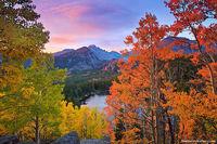 Bear Lake,Longs Peak,Aspens,Fall,Autumn,Rocky Mountain National Park,Colorado,tree,clouds,golden