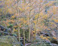 Rocky Mountain National Park, Colorado, Bear Lake, Aspens, Autumn