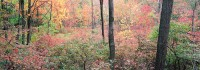 New York, Bear Mountain, State Park, Pallisade, Fall, Hudson Valley
