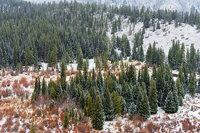 Rocky Mountain National Park,Colorado,Trail Ridge Road,Estes Park,RMNP,Beaver Ponds,Willows,Evergreens,Spruce,Snow,April,Spring,landscape,photography,Hidden Valley ,ponderosas