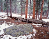 Rocky Mountain National Park, Colorado, Ponderosa Pines, Snow, Beaver Meadows