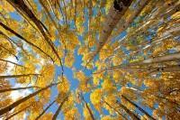 Rocky Mountain National Park, Colorado, Aspen's, Autumn, Bierstadt Moraine
