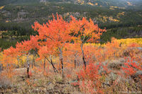 Bierstadt Moraine,Autumn,Fall,Color,Bierstadt Lake Trailhead,Bear Lake Road,Estes Park,RMNP,Colorado,Landscape,Photography,Rocky Mountain National Park,Aspens,September