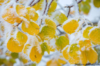 Autumnm,Bierstadt Moraine,Bear Lake Road,Aspens,Fall,Autumn,Snow,Winter,Rocky Mountain National Park,Colorado,RMNP,Frozen,September