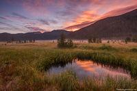 Big Meadows,West Side,RMNP,Moose,Fog,Sunrsie,August,Rocky Mountain National Park,Colorado,Estes Park,Grand Lake,Landscape,Photography