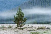 Big Meadows,West Side,RMNP,Grand Lake,Fog,Moody,Rocky Mountain National Park,Landscape,Trail Ridge Road,Colorado,August,Green Mountain,Trailhead,Moose