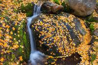 Boulder Brook,Storm Pass Trailhead,Bear Lake Road,Autumn,Fall,Landscape,Photography,RMNP,Colorado,Aspen,Leaves,Rocky Mountain National Park,Estes Park,stream