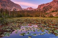 American Dipper,Chickadee Pond,Wild Basin,Ouzel Lake,Ouzel Peak,Sunrise,Reflection,Pond Lilys,Estes Park,Rocky Mountain National Park,Colorado,RMNP,Highway 7,birds,names,enos mills,W.S. Cooper,botany,