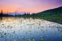 Chickadee Pond,Rocky Mountain National Park,Colorado,Ouzel Lake,Wild Basin,sunrise
