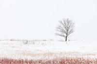 osmp,Davidson Mesa,Open Space and Mountain Parks,Boulder,Colorado,Winter,Snow,Trees