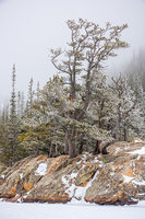 Dream Lake,Trees,winter,Estes Park,RMNP,Rocky Mountain National Park,Colorado,Winter,Snow,Mountains,Hallett Peak,Flattop Mountain,Krummholz