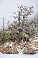 Dream Lake,Trees,winter,Estes Park,RMNP,Rocky Mountain National Park,Colorado,Winter,Snow,Mountains,Hallett Peak,Flattop Mountain,Krummholz