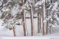 March,Snow,Dream Lake,Trailhead,Bear Lake Road,Estes Park,RMNP,Rocky Mountain National Park,Colorado,Spruce,Pines,Trees