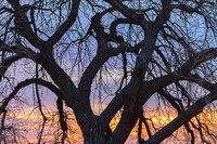 osmp,Open Space,Boulder,Cottonwood,Colorado,Sunrise,silhouette,eagle trail,boulder reservoir,trees,waterways