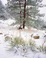 Colorado, Boulder, Flagstaff Mountain, Open Space, Yucca's, OSMP