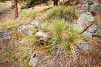 Boulder, Colorado, Flagstaff Mountain, Yucca's, Open Space, OSMP