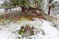Boulder, Colorado, Open Space, Flagstaff Mountain, OSMP, winter, spring, snow