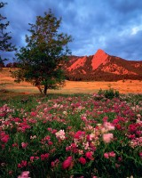 Flatirons, Chautaugua Park, Boulder, Wildflowers, Colorado, Open Space, OSMP