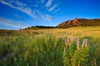 Boulder, Colorado, Silver Lupine, Chautauqua Park, OSMP, Open Space