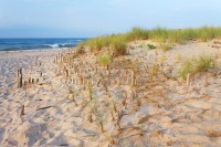 Flying Point Beach, Southampton, New York, Dune Fence, Atlantic Ocean, Long Island