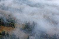 Forest Canyon,Fog,Trail Ridge Road,Rocky Mountain National Park,Colorado,Estes Park,RMNP,Evergreens,Trees,Autumn