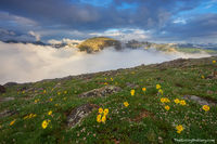 Tundra,Alpine,Landscape,Photography,RMNP,Trail Ridge Road,Hayden Spire,Mount Julian,Terra Tomah,Mountain,Rocky Mountain National Park,Colorado,Estes Park,Grand Lake,Wildflowers,Fog,Canyon,Forest,Sunri
