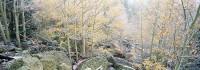 Rocky Mountain National Park, Bear Lake, Colorado, Aspens, Fall, snow, Seasons