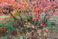 Boulder,Colorado,Gregory Canyon,Chautauqua Park,autumn,open space