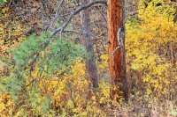 Boulder, Colorado, Fall Color, Gregory Canyon, Open Space, OSMP
